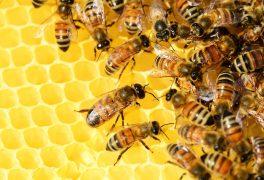 Video: Jak stáčí med?