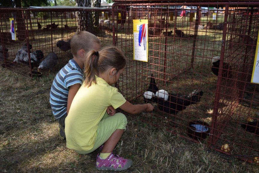 Výstava chovatelů