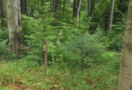 Výzva na výsadbu dřevin