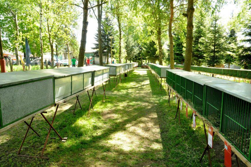 Jarní chovatelská výstava