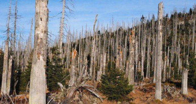 Kůrovec nám žere lesy