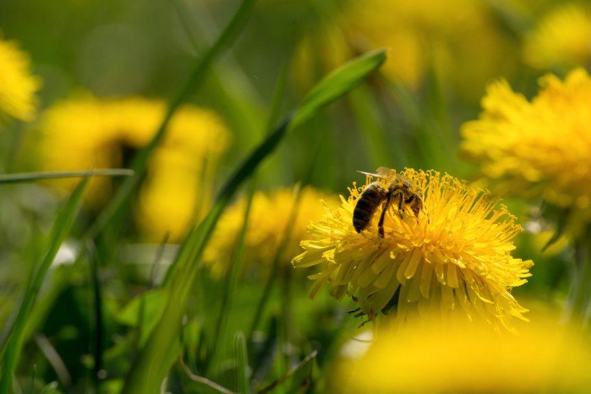 Včelaři měli těžký rok